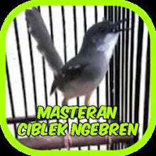 Master Ciblek Ngebren Gacor Offline For Pc Mac Windows 7 8 10 Free Download Napkforpc Com