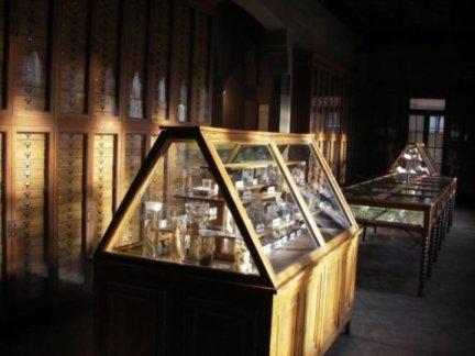 Vitrina del Museu de Zoologia de Barcelona