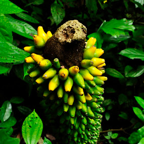 by Azwan Abdul Aziz - Nature Up Close Other plants