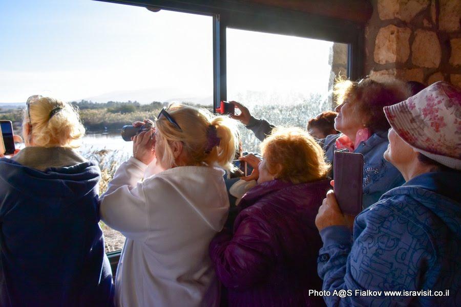 Наблюдение за поведением птиц на экскурсии в заповедник Хула в Израиле.
