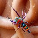 Elegant golden jumping spider