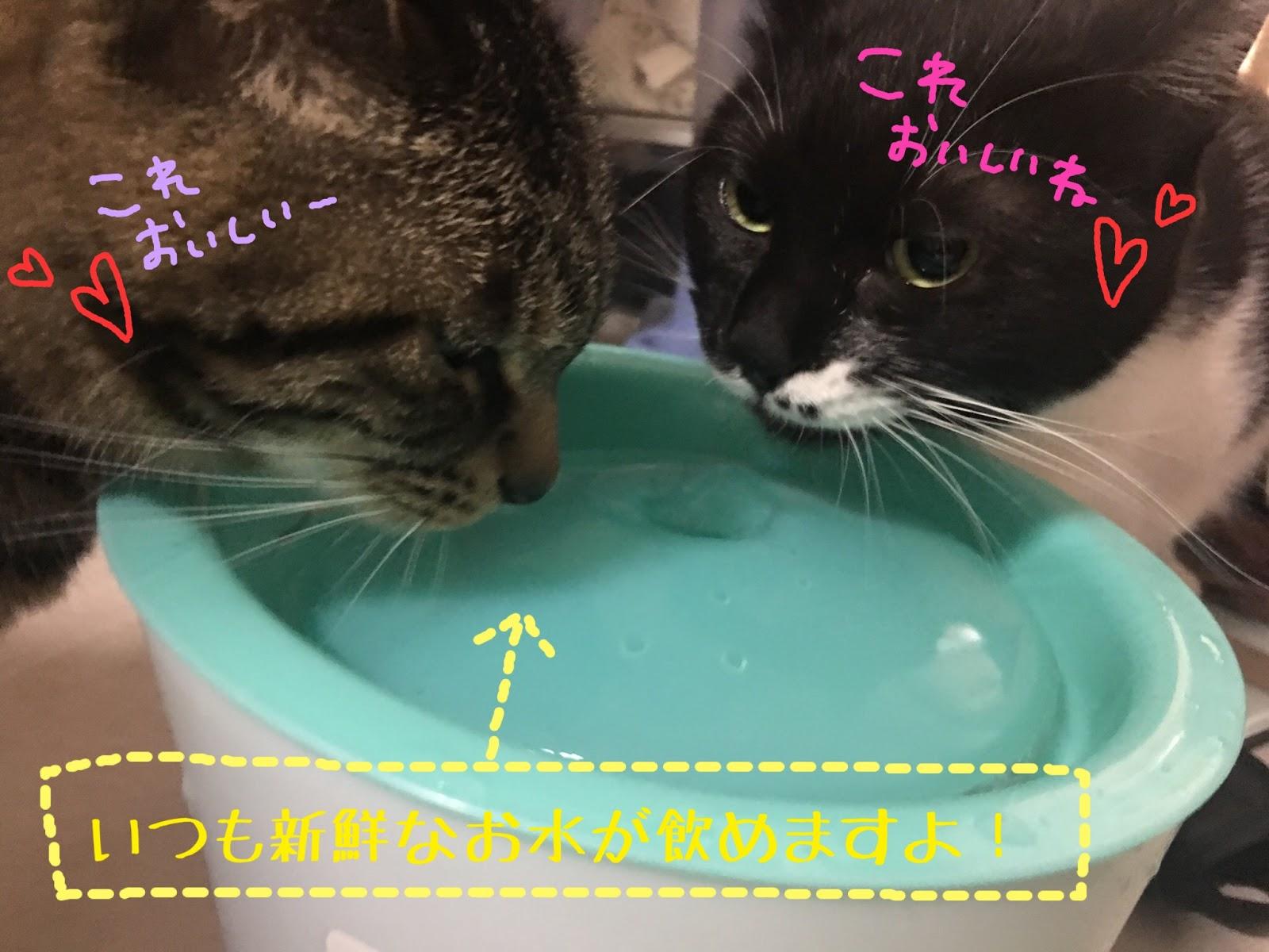 猫に多い腎不全の前兆!おしっこでわかる病気と症状の関係