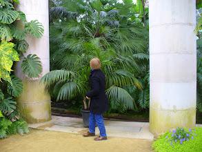 Photo: palme