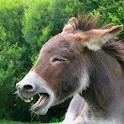 Donkey Sounds icon