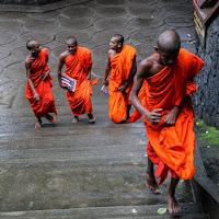 Orange in Sri Lanka di