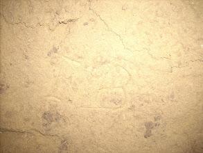 Photo: Erdstallvermessung Gaweinstal am 2.11.08. Bei der Vermessung entdeckt, unbekannt hat sich vor langer Zeit im Erdstall verewigt. http://erdstall.heim.at
