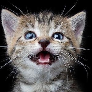 IMG_0414 nellie kittens-v2-s.jpg
