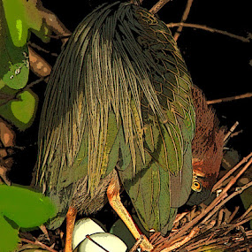 Green Heron on Eggs by Herb Houghton - Digital Art Things ( wading bird, green heron, nest, egret, greenie )