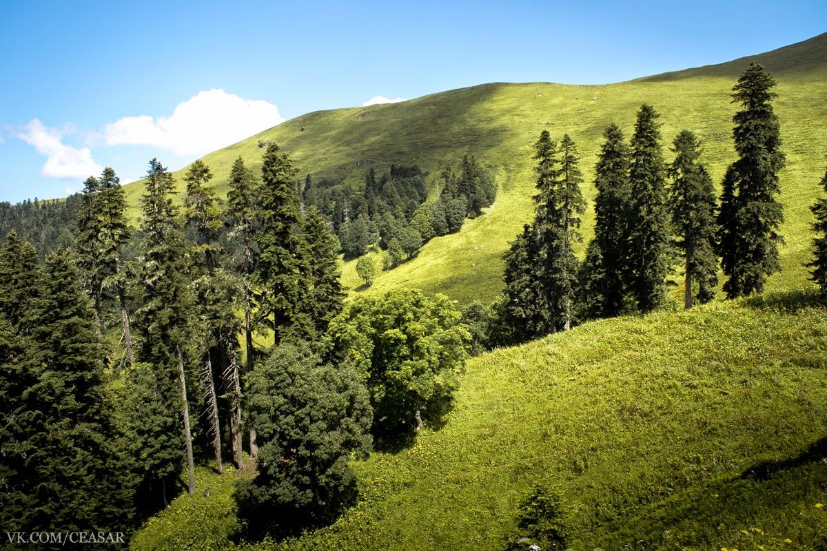 Альпийские луга, Абхазия, Рица