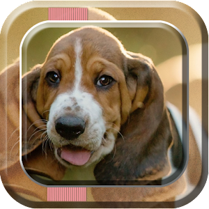 download Puppy Live Wallpaper 2 apk