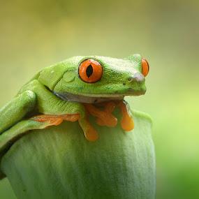 by Harry Aiee - Animals Amphibians