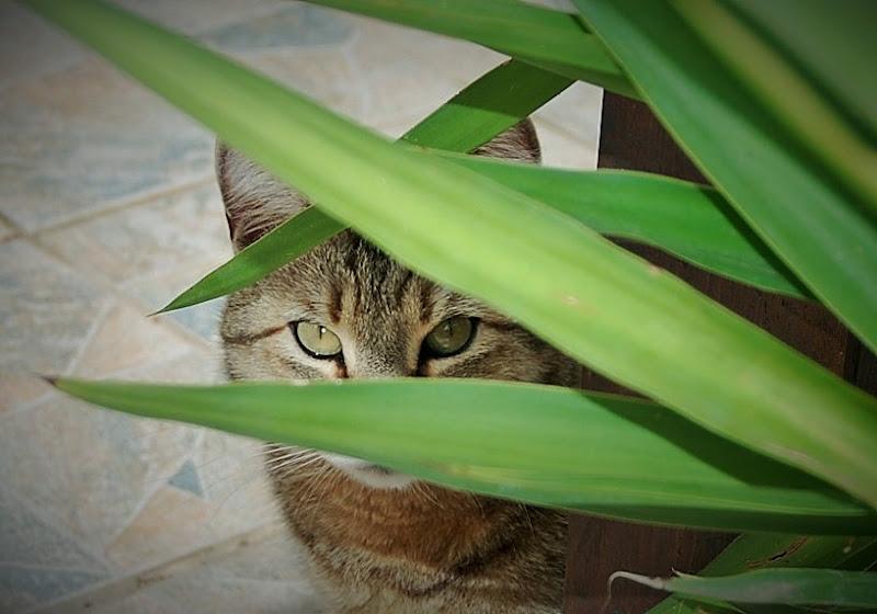 Occhi che ti osservano.... di kolosso