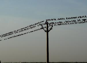 Photo: Auch in Indien sammeln sich Vögel, um fortzuziehen.