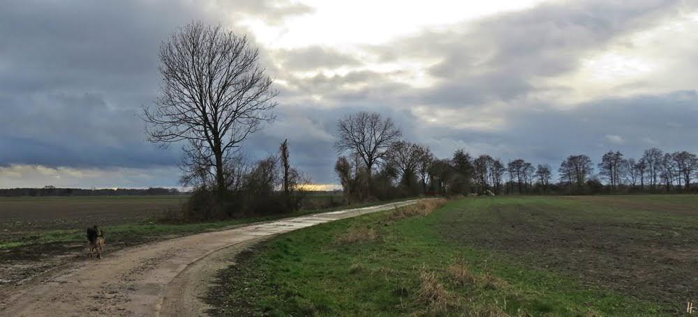2018-12-09 LüchowSss unterwegs (2) Feldweg + Bongo + Wolkenhimmel