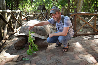 Photo: Giant tortoise on Prison Island