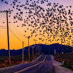Flocking Traffic Jam!  by Brendan Mcmenamy - Novices Only Street & Candid ( traffic, rangeland, ramona, jam, flock )