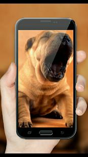 Baby Dog Funny HD - náhled