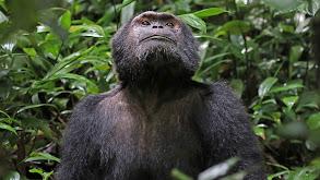 Primates: Family Matters thumbnail