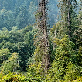 by Keith Sutherland - Landscapes Forests ( gold stream park )