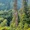 Gold Stream Park Trees 19 08 18.jpg
