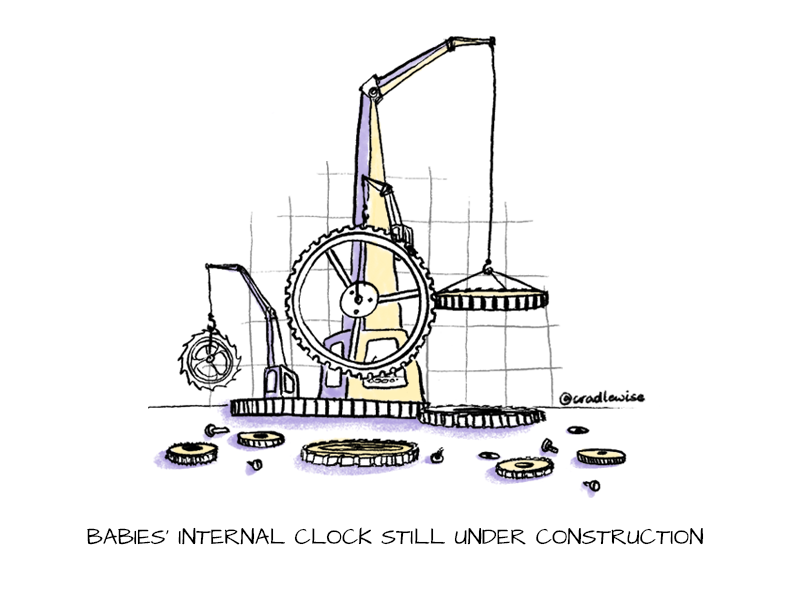 The master clock inside a baby's brain is under construction