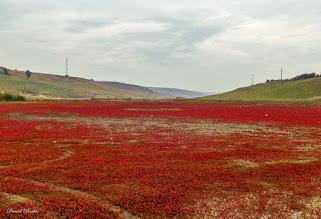 Photo: Turda - Durgau-Valea Sarata  - 2014.10.15 - foto Daniel Borbe, pe Facebook - https://www.facebook.com/daniel.borbe.7/media_set?set=a.752927641411706.1073741920.100000834303675&type=3