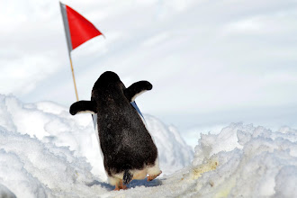 Photo: Carrying the flag proudly!