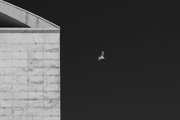 Il Volo di Domenico Cippitelli