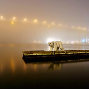 A Polar bear a foggy evening in Gothenburg  by Eva Larsson - Uncategorized All Uncategorized ( lights, water, sweden, night photos, foggy, reflections, polar bear. bridge, evening )