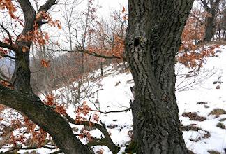 Photo: A lukas fa jelzi a betérési 400m-s szintet a kőfalak felé.