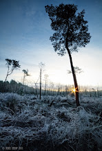 Photo: Last image of the day, taken last winter, I was travelling through Delemere Forest, its a very dense forest when I walked into this clearing, it took my breath away.