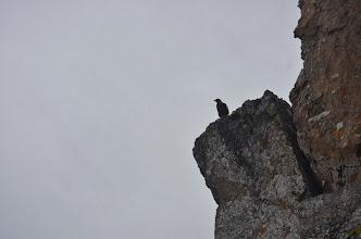 Photo: un guillemot miroir qui nous surveille et nous tient compagnie pendant l'ascension