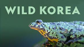 Wild Korea thumbnail