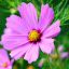 The purple beauty by Niranjan Rajendran - Nature Up Close Flowers - 2011-2013 ( macro, nature, purple, beauty, flower,  )