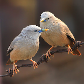 Discussion  by Mrinmoy Ghosh - Animals Birds (  )