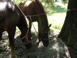 Photo: Die Pferde haben auch eine Pause
