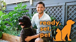 Ready, Set, Pet thumbnail
