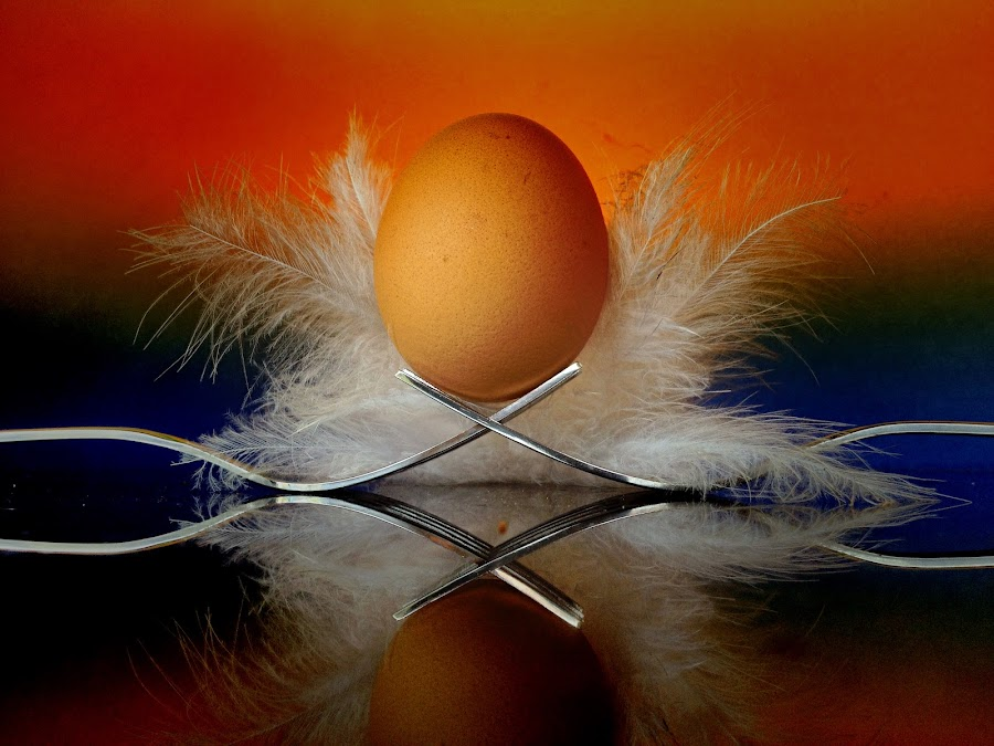 Egg and feathers by Janette Ho - Artistic Objects Still Life (  )