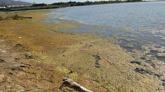 Vertidos de la EDAR en la desembocadura del río Almanzora, en la costa cuevana.