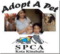 SPCA KK