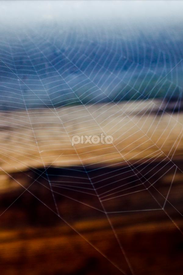 spidy by Selman Parlak - Nature Up Close Webs ( canon, eos, m42, lübeck, liebe )