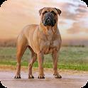 Bullmastiff Dog Live Wallpaper icon