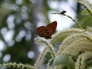 Photo: カナブンと遊ぶ蝶。