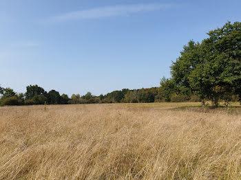 terrain à Neung-sur-Beuvron (41)