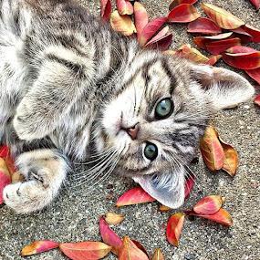 MY CUTE LITTLE KITKAT!😻😻@tagstagram by Melanie Pond - Uncategorized All Uncategorized ( TagStaGram, cat, cats, pet, petstagram, nature, kitten, kittens, catstagram, cutie, pets, kitty, catlovers, catsofinstagram, animal, sweet, funpetlove, catlover, ilovemycat, ilovemypet, instapets, petsagram, picpets, instacat, love, tagsta, tagsta_nature,  )