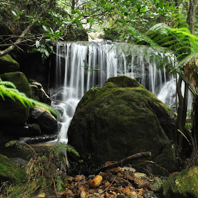 by Carley Reed - Landscapes Forests ( green, beautiful, waterfall, moss, ferns, rainforest )