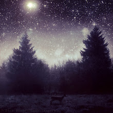 Photo: #nocturnal   #stars   #textureblendphotography   #manipulation  have a great time http://wuestenhagen-imagery.photoshelter.com/