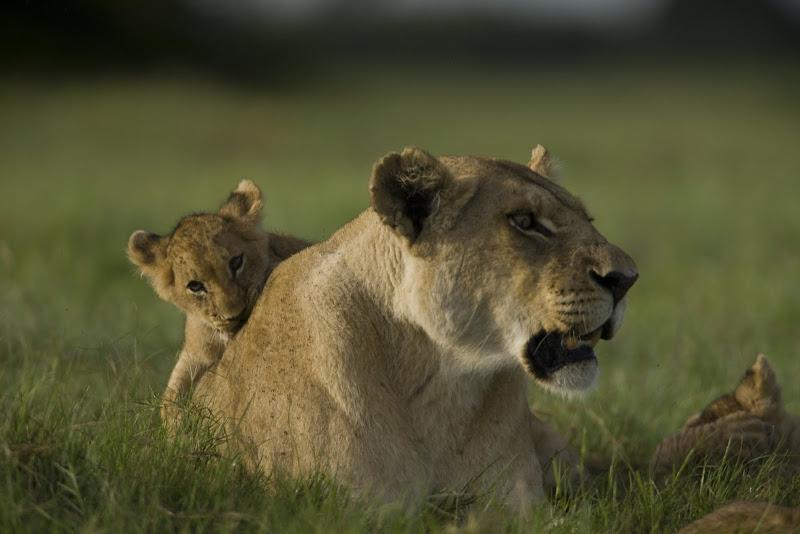 Ma di Tau and her cub