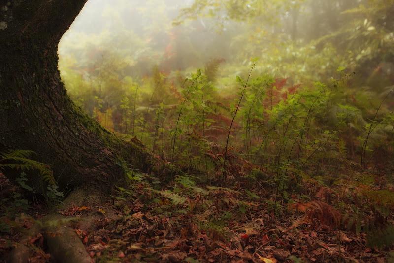 La magia del bosco di rik