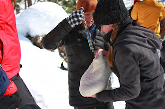 Photo: Two UWSP College of Natural Resources students weigh a black bear cub